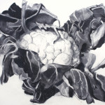 Brassica 1, 2013, Charcoal on Paper