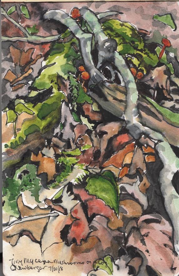 Mycena Mushrooms on a Log